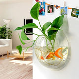 Hanging Glass Planter Terrarium