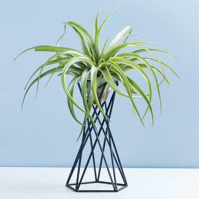 Nordic Style Air Plant Holder - Silky decor