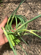 Load image into Gallery viewer, Garlic scapes