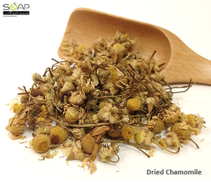 Soap Artisan | Chamomile Dried Flowers  洋甘菊花苞