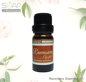 Ravensara Essential Oil 桉油樟精油