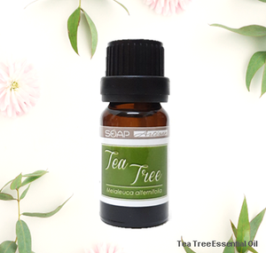 Soap Artisan | Australian Tea Tree Essential Oil