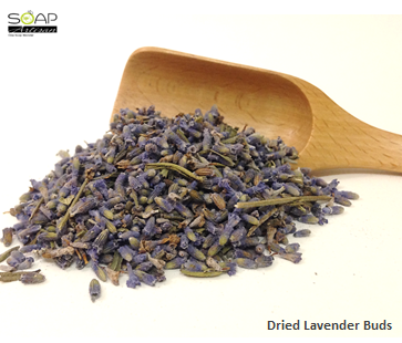 Soap Artisan | Dried Lavender Buds  干燥薰衣草花苞