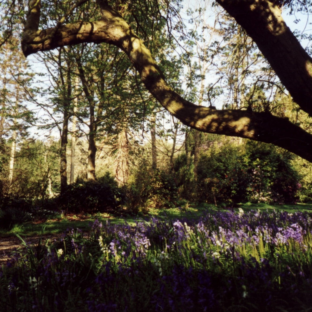 Woodland Walk with Picnic - minimum 10 people - 17 March 2021 - 11am or 2pm