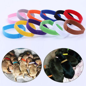 12 Piece Set Pet Adjustable Identification Collar