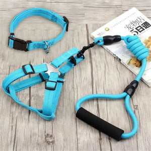 Pet Leash and Collar