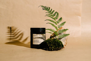 ETIKETTE CANDLE 175MM SINGLE WICK DAINTREE - Forest Floor Moss & Teak