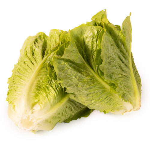 Lechuga larga hoja lisa