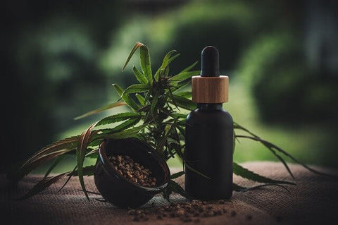 CBD Oil and Plant