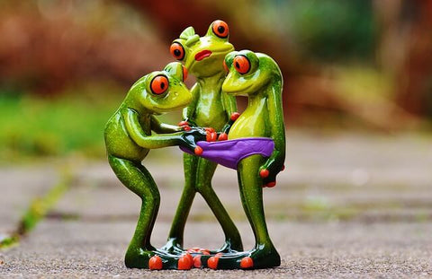 Curious Frogs Funny