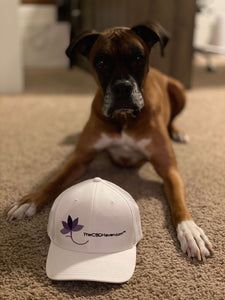 The CBD Haven Logo Hat with Boxer Dog