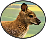 raw wallaby pet food