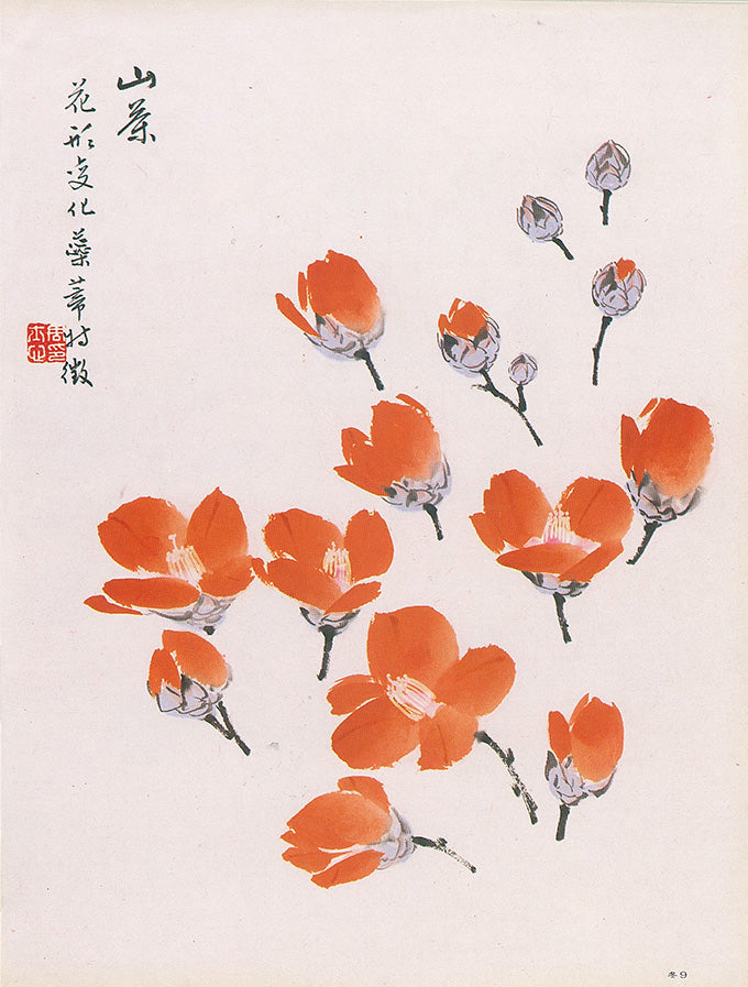Tea Flower Blossom elements in isolation. Different flowers in various stages of bloom are rendered by Su-sing Chow