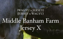 Load image into Gallery viewer, Middle Bamham Farm Jersey X - Feather Blade