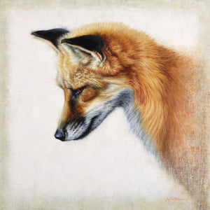 "Sungila - Red Fox ~ 20""x20"""