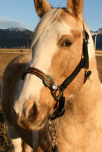 Load image into Gallery viewer, Arrow bronc halter