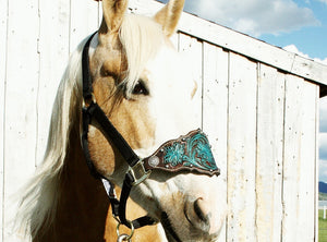 Bronc halter in turquoise and dark brown with studs