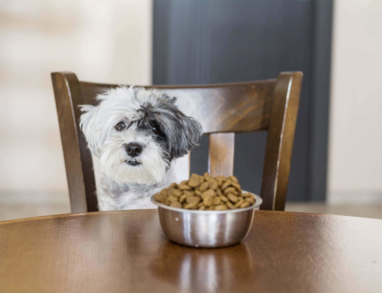 Affordable Healthy Diet for Dogs Part 4: Healthy, Budget-Friendly Dog Food