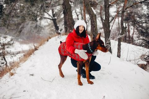 4 Questions and Answers About Keeping Your Dog Warm in the Winter