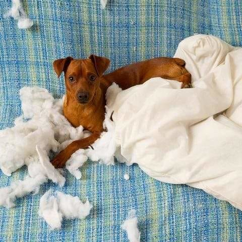 5 Tips for Preventing Your Dog from Chewing Up Your Home