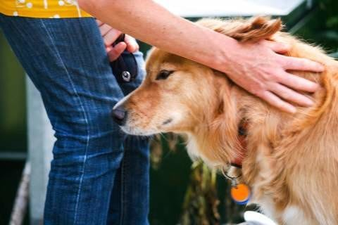 5 Tips for Proper Dog Petting Etiquette