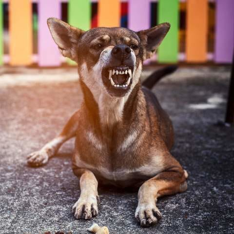 5 Ways to Tell If Your Dog is Jealous and What to Do About It