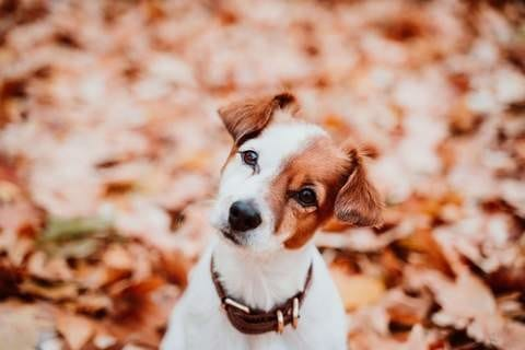 Is Your Doggie Being Cute On Purpose?