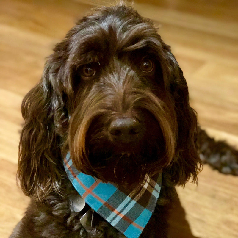 Dog Bandanas - Plaid Flannel