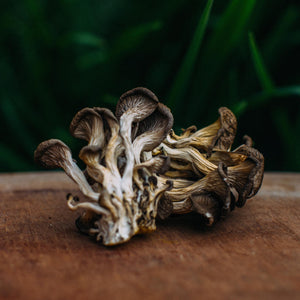Load image into Gallery viewer, Dried Blue Oyster Mushrooms