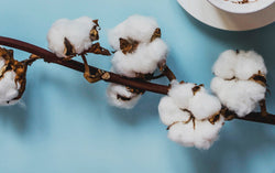Why is Organic Cotton Better Than Conventional Cotton?