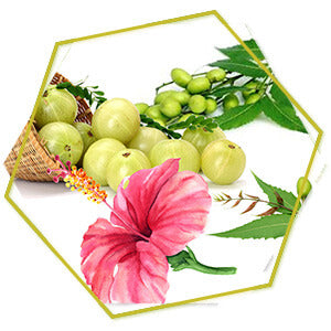 Amla, Hibiscus and Neem