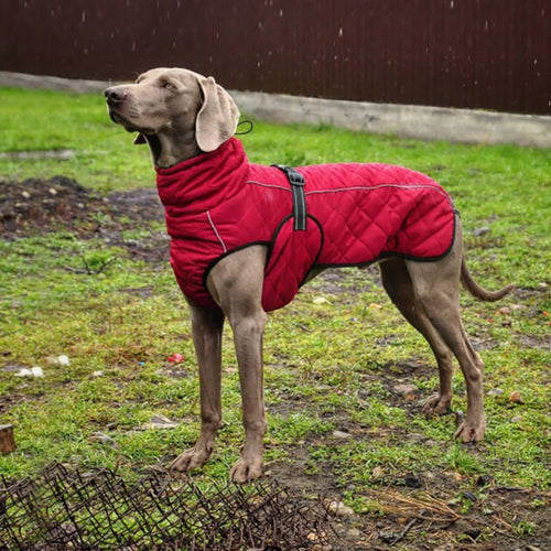 Wholesale Pet Clothes Jacket For Dog Winter