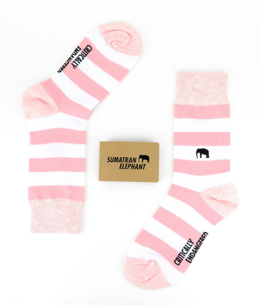 Critically Endangered Socks Sumatran Elephant - Striped