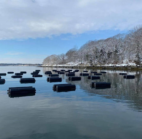 Butterfield Oyster Farm Cages