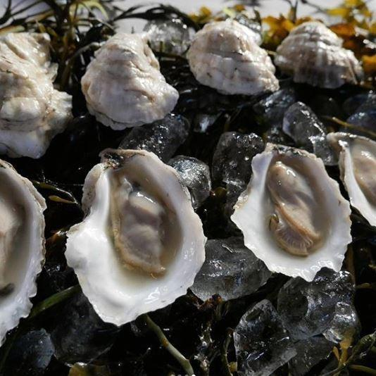 Moshier Island Maine Oysters - SoPo Seafood