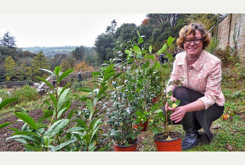 Jenny Tunley-Price with the first tea plants