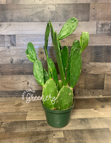 "Prickly Pear Cactus 8"" *LOCAL PICKUP ONLY*"