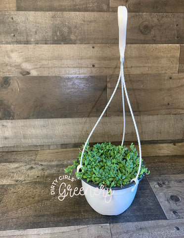 "String of Watermelons 6"" HB"