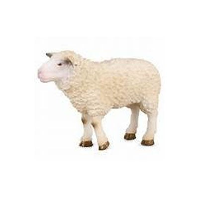 Border Leicester Sheep - Collecta