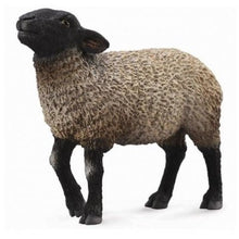 Load image into Gallery viewer, Suffolk Sheep - Collecta