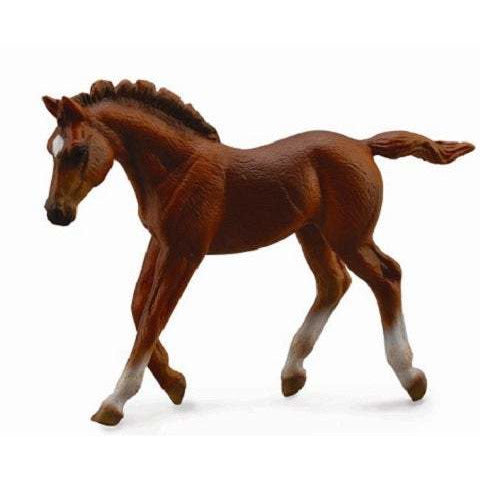 Horses - Thoroughbred Foal (Chestnut walking) - Collecta