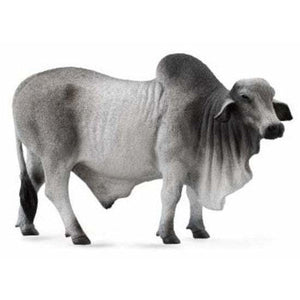 Grey Brahman Bull - Collecta