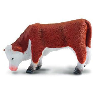 Hereford Calf Grazing - Collecta