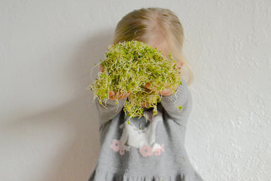 Sprouting | Growing with a Toddler