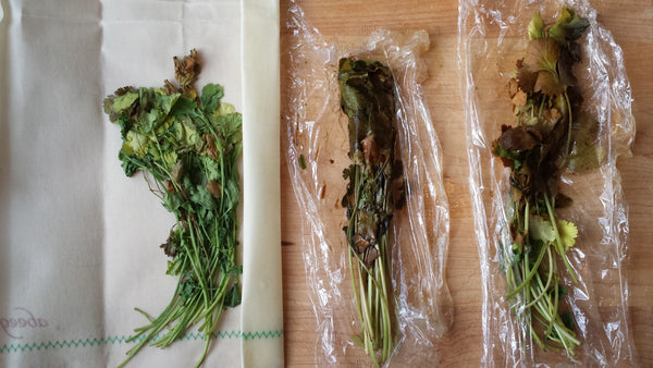 comparison of cilantro in plastic wrap & Abeego