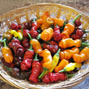 100Pcs/Pack Chili Seeds Red Green Yellow Peppers Funny Kitchen Seasoners Plants Seeds