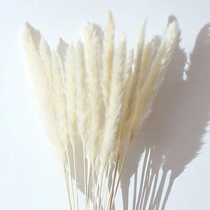 200Pcs Pampas Grass Magic Garden Seed Potted Ornamental Plants Purple Pampas Grass Bonsai