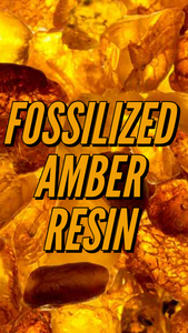 Fossilized amber resin