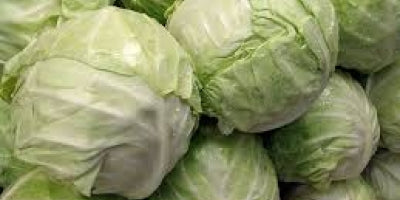 White Cabbage Box 25 Kilo