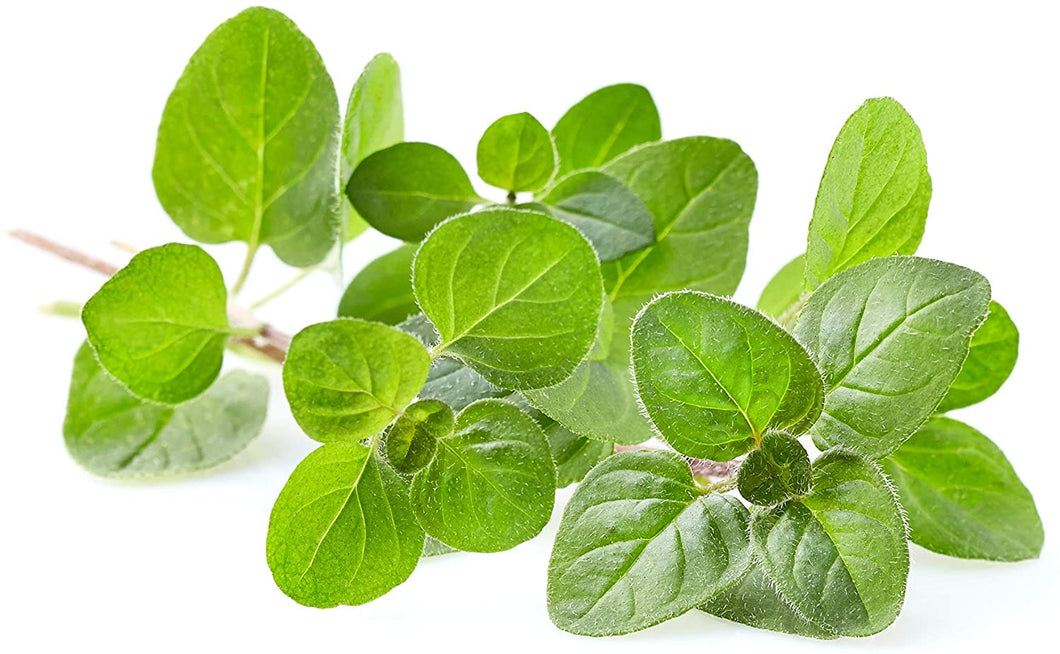 Oregano Bunch